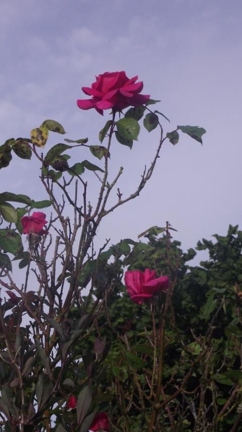 Nous gardons tous un jardin secret, mélange de rêve et de réalité.  Denis Labayle