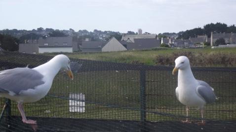 Île Grande Station pour la protection des oiseaux
