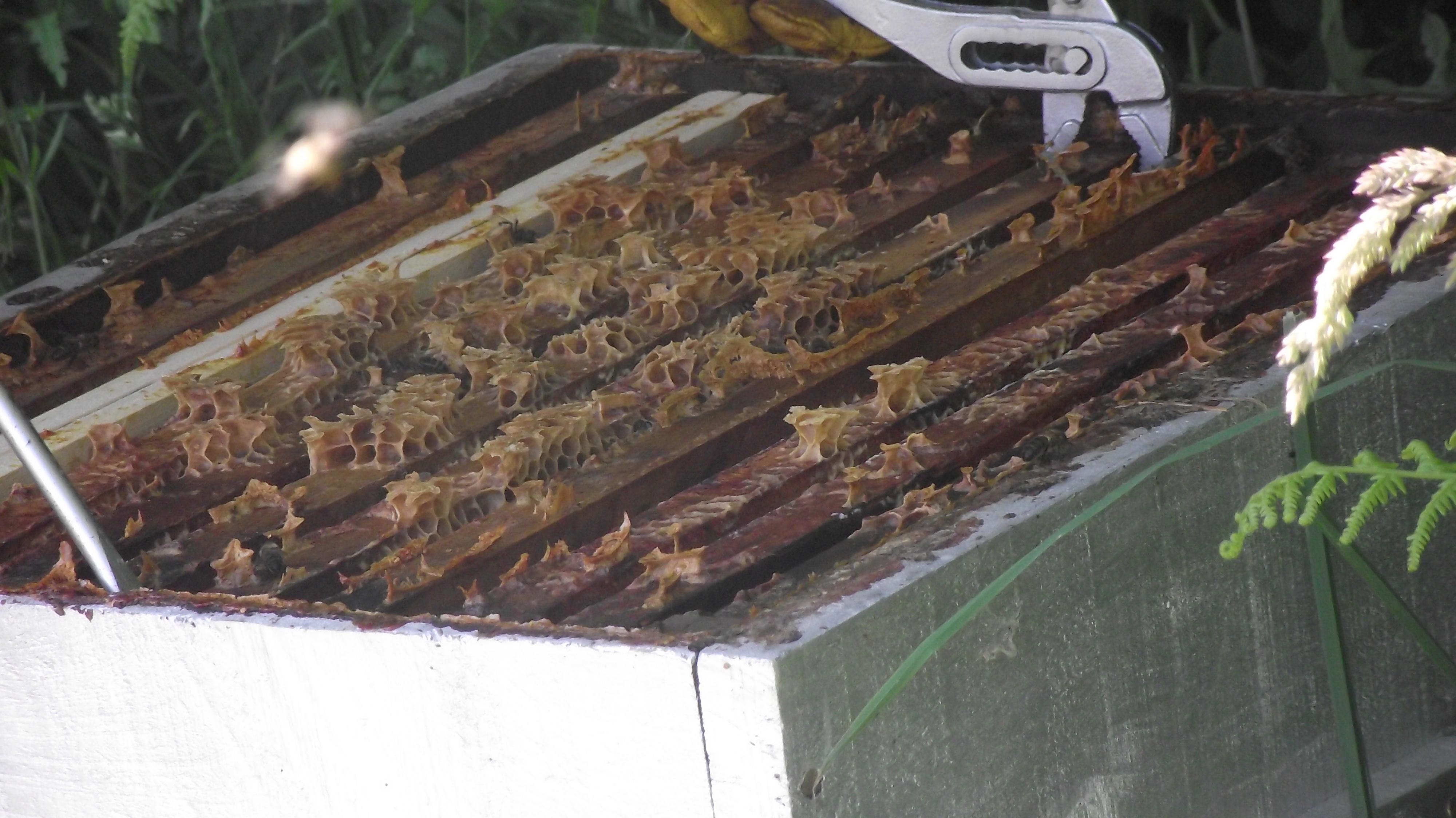 comment pourrait on vivre sans les abeilles a vos. Black Bedroom Furniture Sets. Home Design Ideas