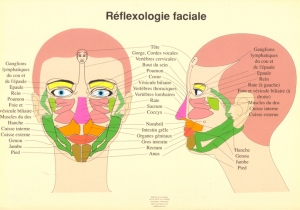 reflexologie du visage