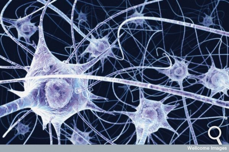 RTEmagicC_neurone-6